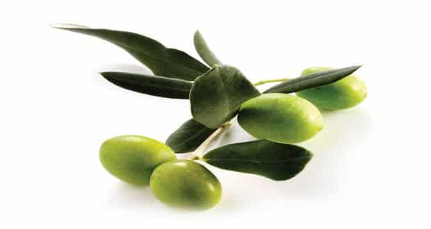 olive leaf extract cures